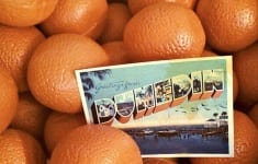 dunedin-orange-fest