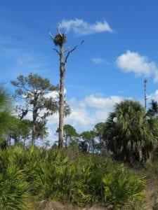 wildlife bird's nest
