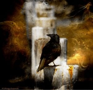 """Crow in Shadows"", Stoney Lawrentz"