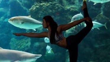 Yoga at the Aquarium221