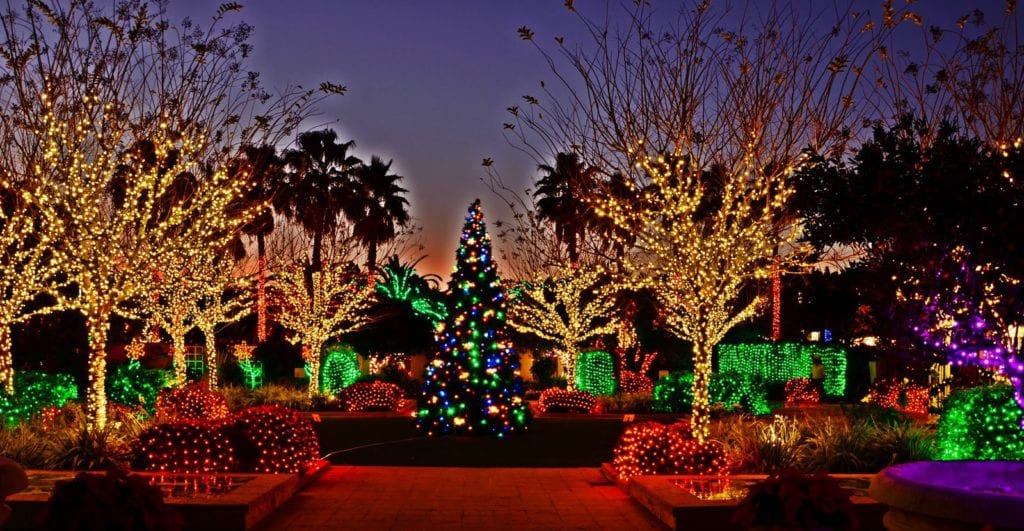 Holiday Lights at the Florida botanical gardens in largo